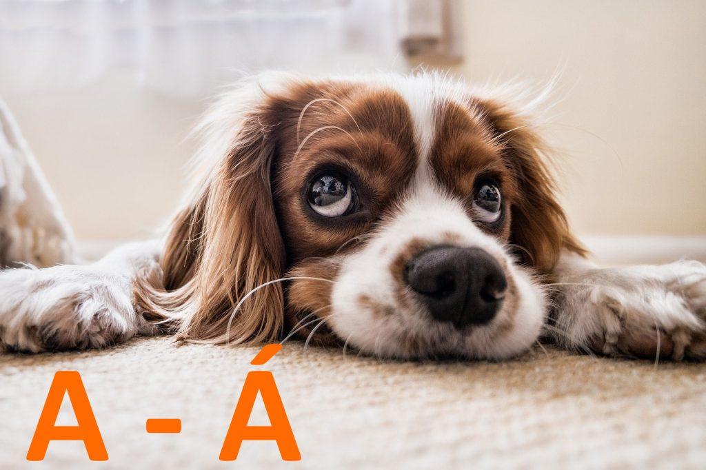 kutya nevek a - á betűvel