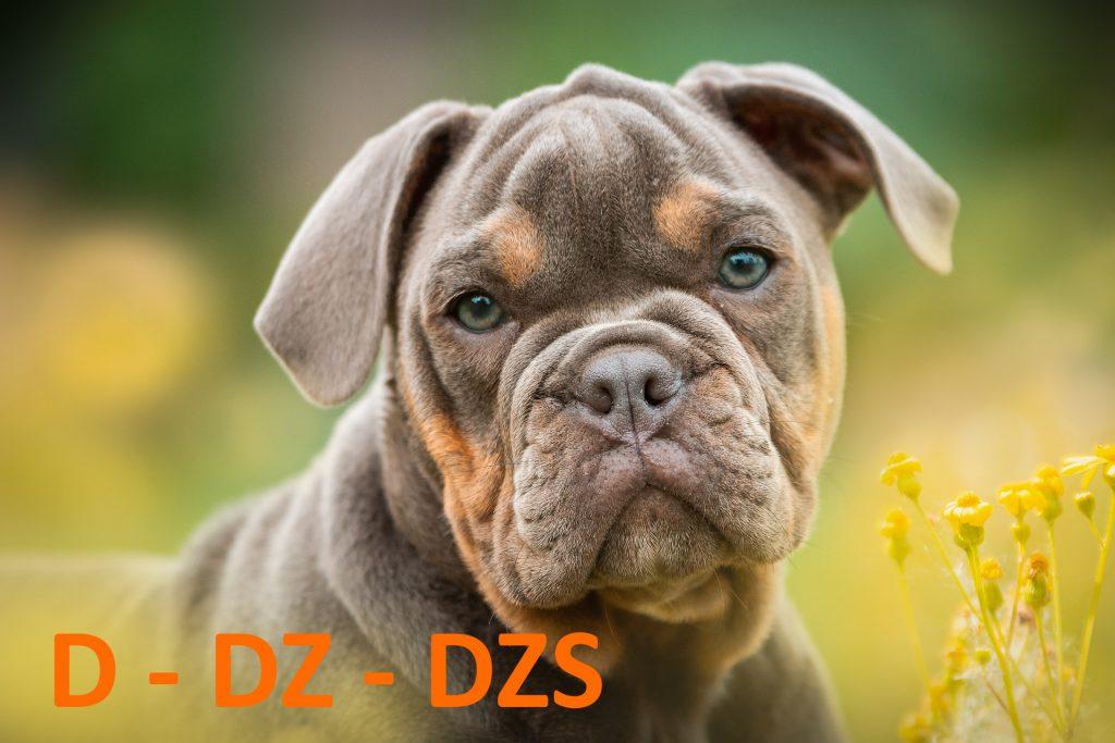 kutya nevek d - dz-dzsbetűvel