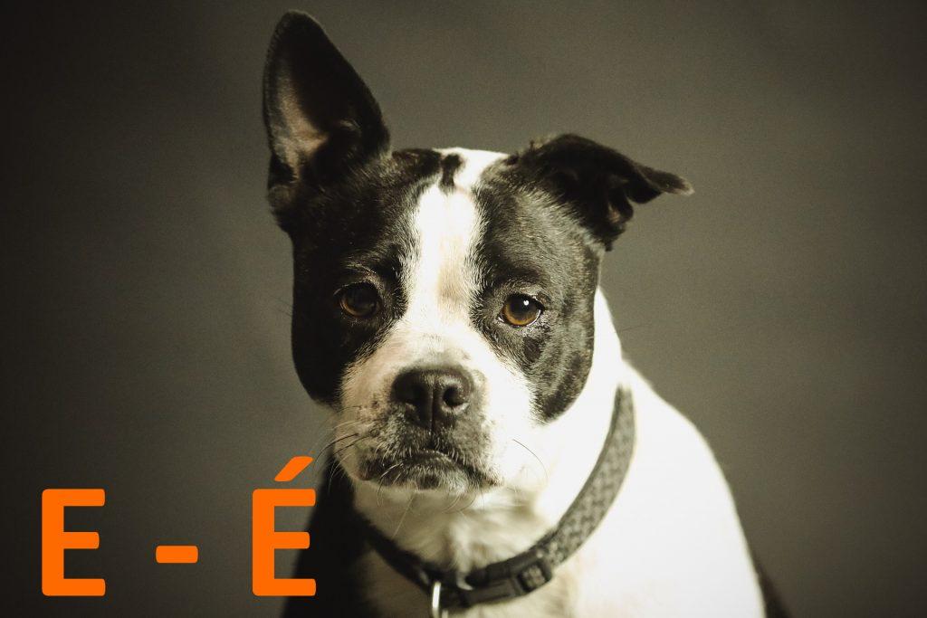 kutya nevek e - é betűvel