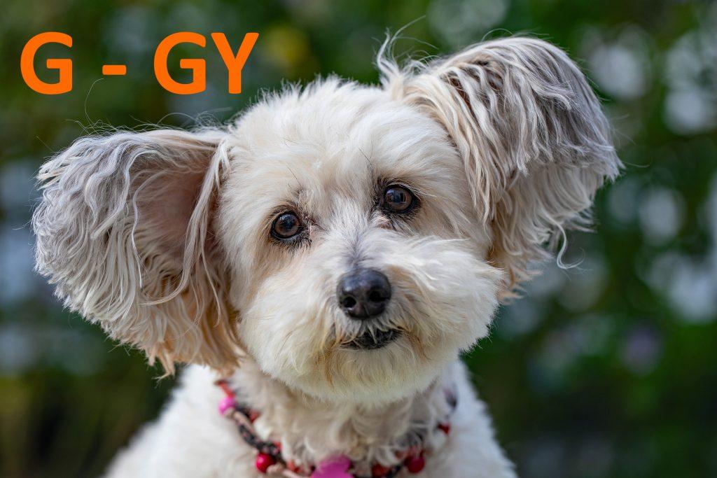 A kutya nevek kiválasztása legalább annyi nehézséget okoz, mint a gyermekek nevének megtalálása. Hiszen mindkét esetben szeret nivaló, érző lényekről van szó, a kutyanevek pedig napjainkban már soha véget nem érő változatban lelhetők fel. Ezek próbálunk segíteni, a legszebb kutyanevek egy helyre gyűjtésével. Az alábbi listában ábécé sorrendben olvashatók azok a cuki kutya nevek, melyeket mi is imádtunk. Ha te a vicces kutyanevek után kutatnál, akkor sem kell messze menned, hiszen jó pár ilyen kutyanévvel is találkozni fogsz. Kutya nevek A - Á betűvel Aaron, Alcsi, Arad, Aba, Áldás, Aragon, Aba, Áldáska, Aramis, Abád, Aldi, Aranja, Abba, Aldo, Arany, Abbé, Áldomás, Aranyos, Abbiz, Áldor, Arató, Abby, Alea, Árboc, Ábel, Alegro, Archibald, Abigail, Alex, Archie, Abina, Alexa, Ardó, Abog, Alexi, Ares, Abony, Alf, Árész, Abora, Alfa, Argent, Abos, Alfa, Argó, Abosa, Alfi, Alfie, Alfy, Argó, Abramo, Alfonz, Argon, Ábránd, Alfonz, Argosz, Ábrány, Alfréd, Árgus, Absa, Ali, Ari, Abu, Alia, Arianna, Abu, Alirán, Ariel, Acél, Alis, Arielle, Acela, Alisha, Arika, Achat, Alíz, Arikara, Acid, Alkony, Arina, Action, Allegro, Arioko, Acsa, Allie, Arisha, Ácsi, Alma, Aristo, Ada, Almár, Aristy, Adara, Almás, Arka, Ádáz, Almaz, Árkád, Ádáz, Álmi, Álmos, Arko, Adda, Almond, Arlett, Addison, Álmond, Arlett, Adél, Álmos, Arlos, Adél, Aloa, Arma, Adelina, Álom, Armani, Adiba-Tiana, Alonso, Ármány, Adolf, Alpha, Ármin, Adolfa, Aluna, Armor, Ádomás, Ally, Arni, Adonis, Alyssa, Árnika, Adonisz, Amadeus, Arnold, Adony, Amanda, Arnót, Adorján, Amani, Árnyék, Adria, Amar, Aron, Adson, Amarilla, Árpa, Adu, Amarula, Árpád, Adus, Amayetta, Árpás, Aetna, Amazon, Árpi, Aflynn, Amber, Arrow, Áfonya, Ambusztán, Arshaq, Afton, Amelie, Arta, Aga, Ámen, Ártádi, Ágacska, Ameria, Artemon, Agád, American Pie, Arti, Agancs, Amey, Artúr, Arthur, Ágas, Ami, Aruba, Ágas-Bogas, Amiable, Aruna, Agát, Amica, Árva, Agathe, Amie, Árvácska, Agent, Amigo, Árvád, Aggó, Amika, Arwen, Agi, Agor, Amira, Arzén, Aglaja, Am