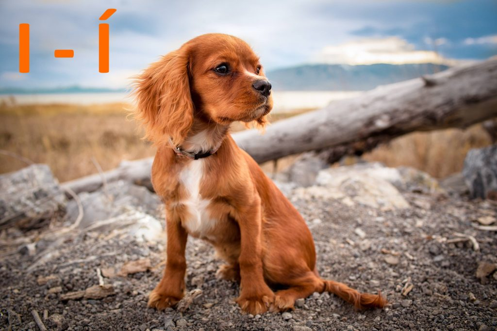 kutya nevek i - í betűvel