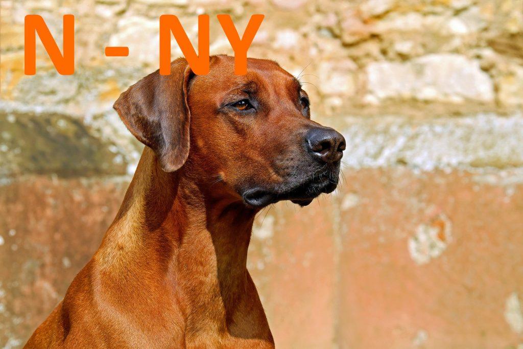 kutya nevek l - ly betűvel