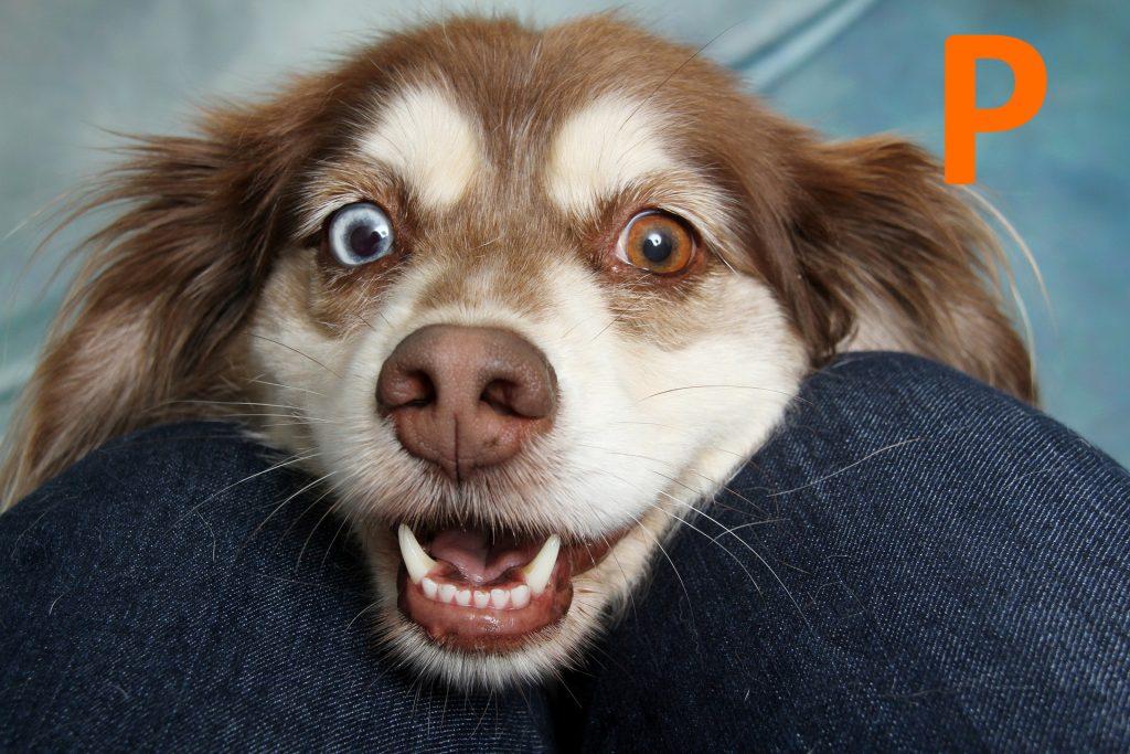 kutya nevek p betűvel