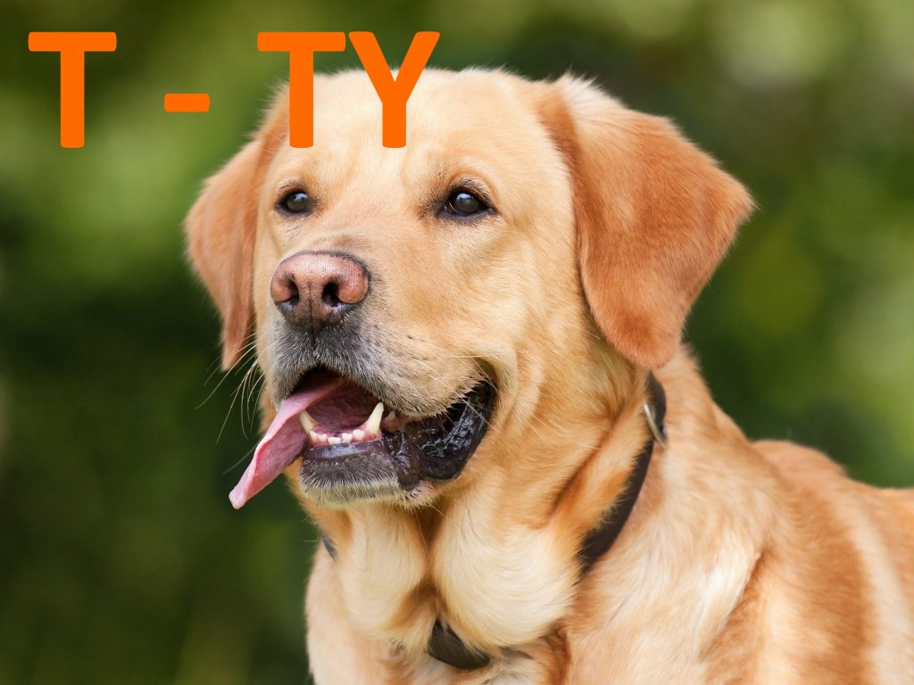 kutya nevek t - ty betűvel