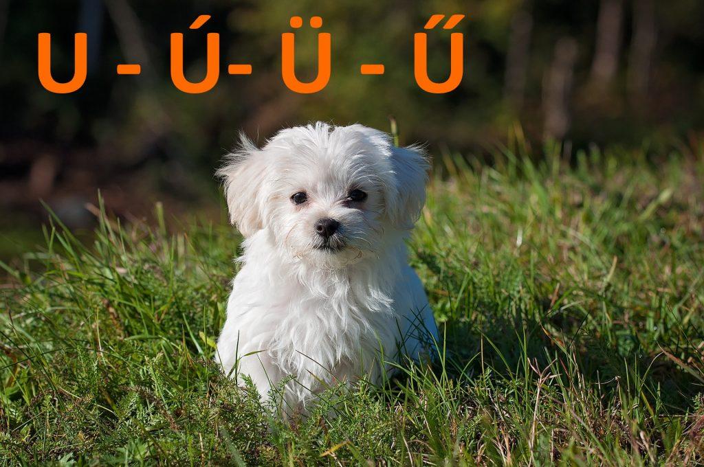 kutya nevek u - ú - ü - ű betűvel