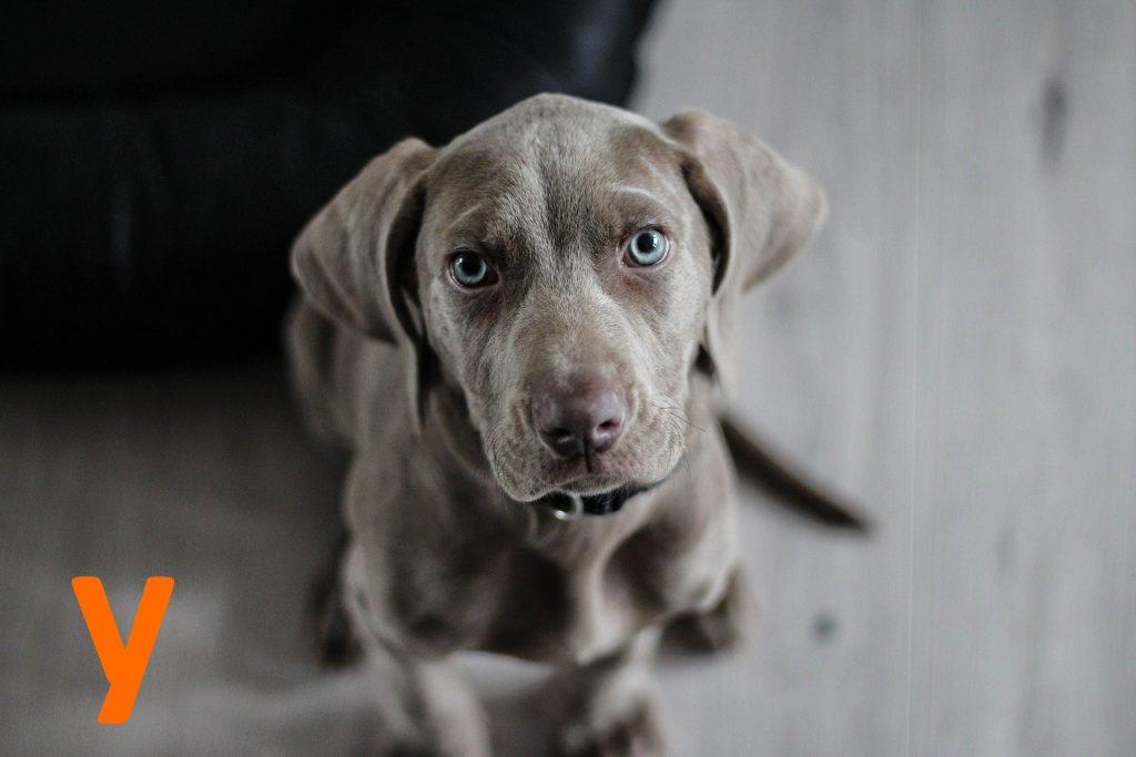 kutya nevek y betűvel