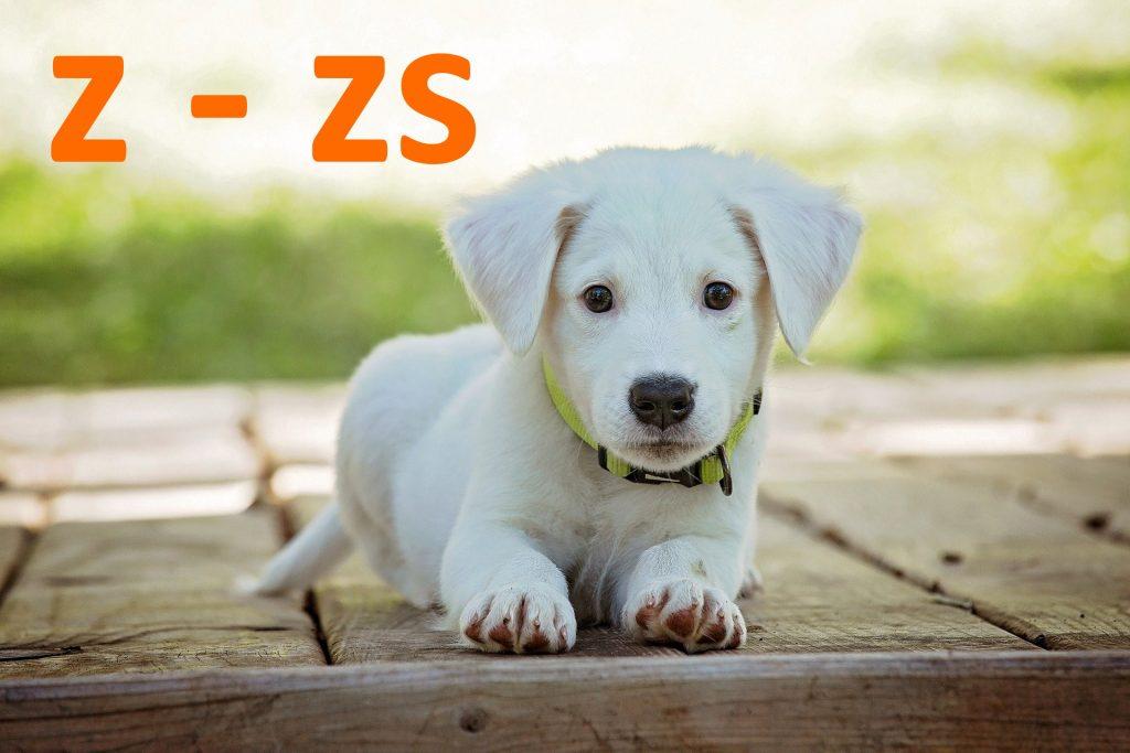 kutya nevek z - zs betűvel