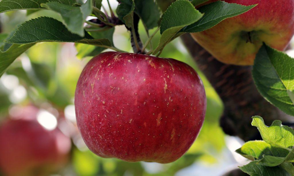 alma - egy igazán egészséges gyümölcs